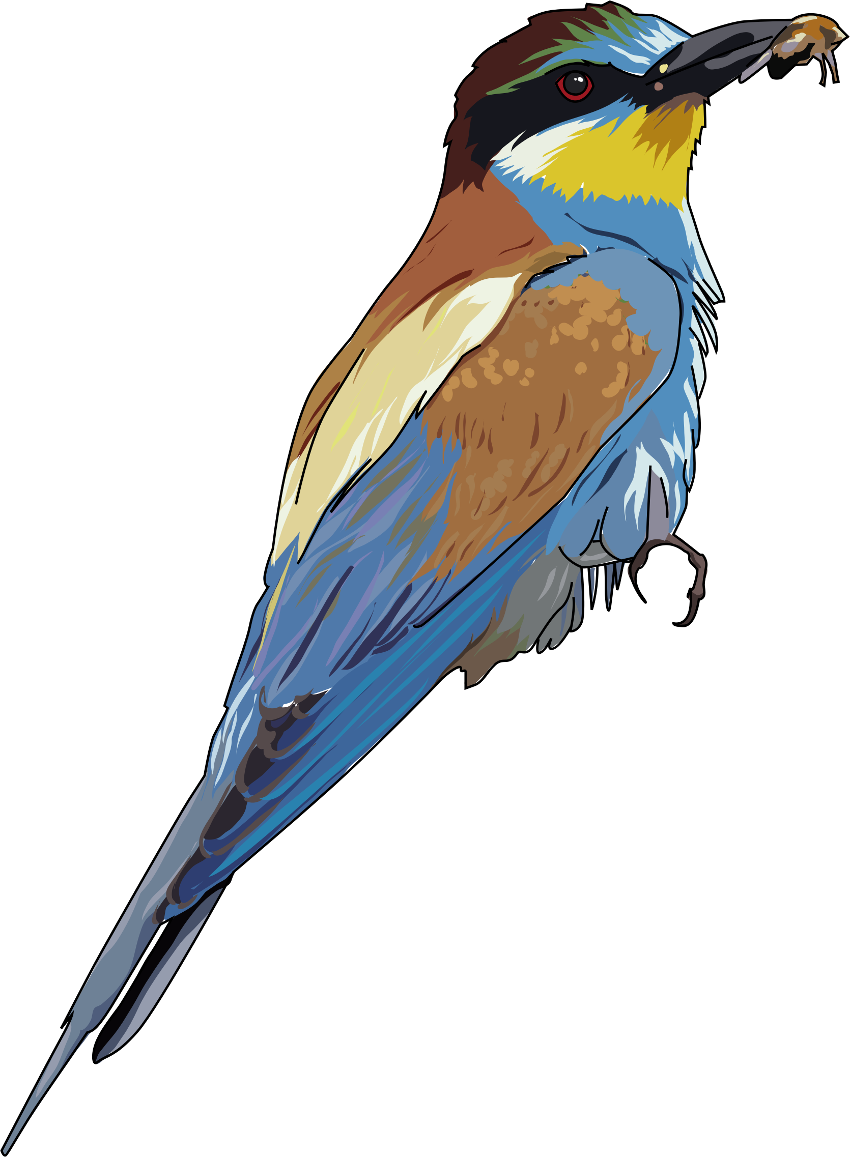 European Bee-eater clipart #3, Download drawings