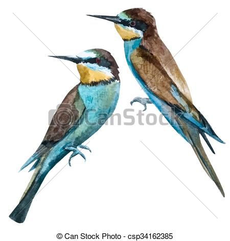 European Bee-eater clipart #10, Download drawings