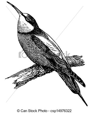 European Bee-eater clipart #8, Download drawings