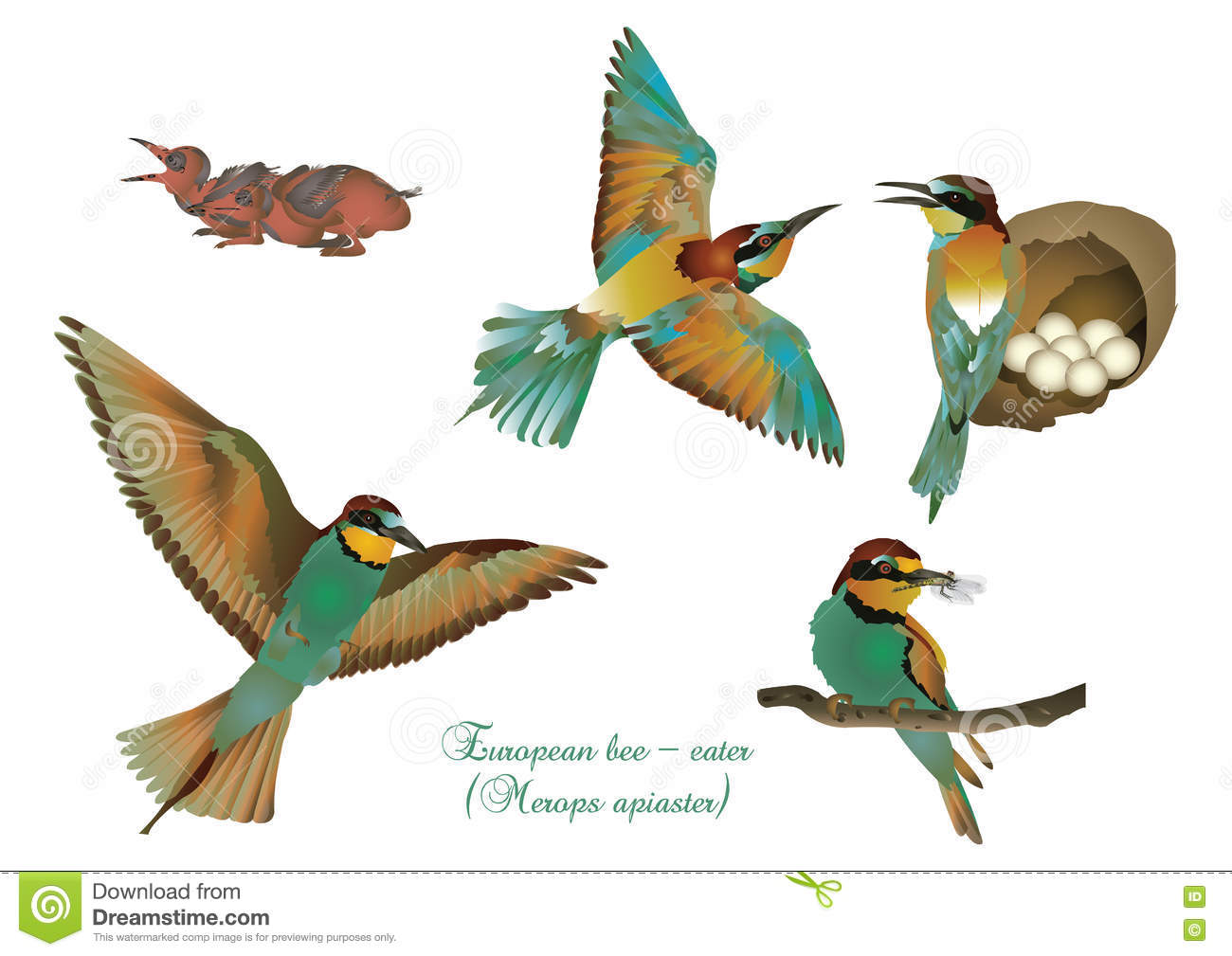 European Bee-eater clipart #11, Download drawings