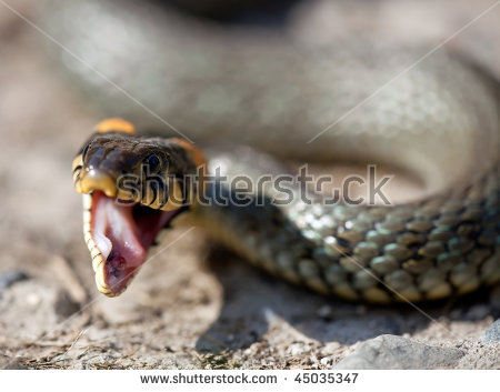 European Grass Snake clipart #13, Download drawings
