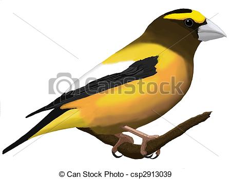 Evening Grosbeak clipart #15, Download drawings