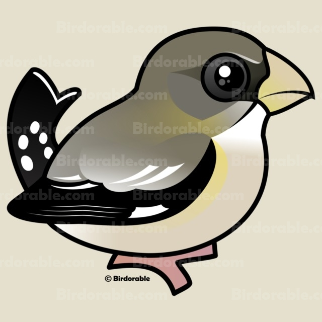 Evening Grosbeak clipart #9, Download drawings