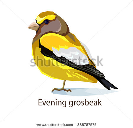 Evening Grosbeak clipart #14, Download drawings