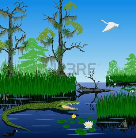 Everglades clipart #5, Download drawings