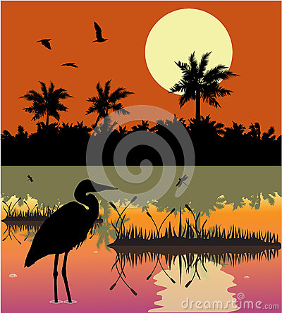 Everglades clipart #7, Download drawings