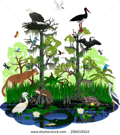 Everglades clipart #10, Download drawings