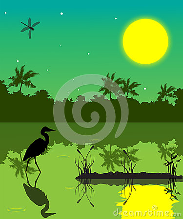 Everglades clipart #15, Download drawings