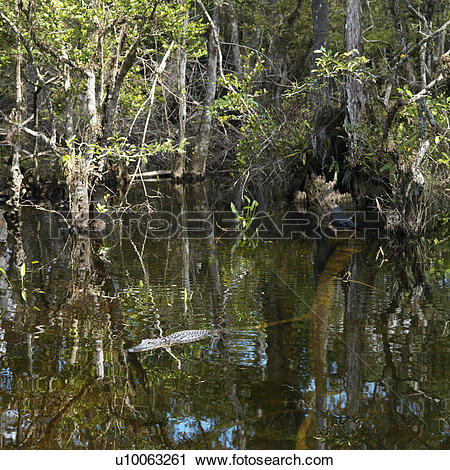 Everglades National Park clipart #9, Download drawings