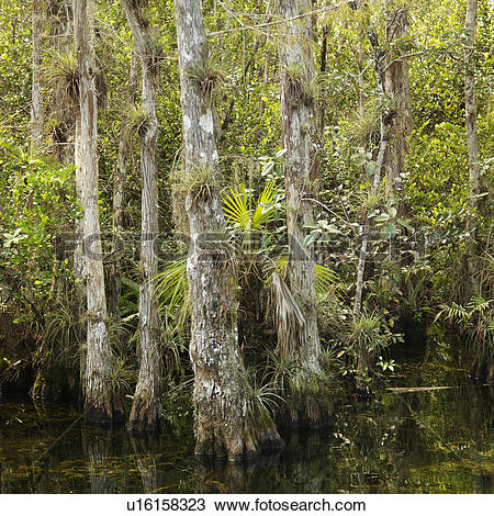 Everglades National Park clipart #6, Download drawings