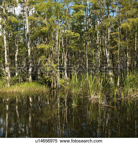 Everglades National Park clipart #4, Download drawings