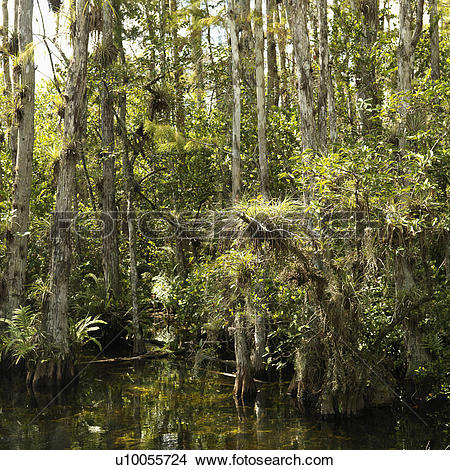 Everglades National Park clipart #7, Download drawings
