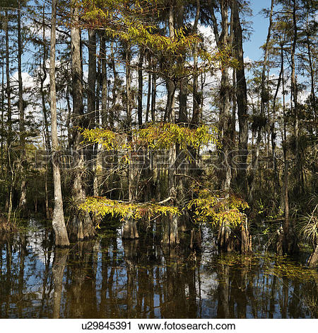 Everglades National Park clipart #5, Download drawings