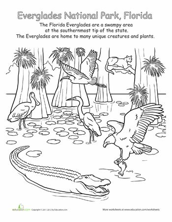 Everglades National Park clipart #2, Download drawings