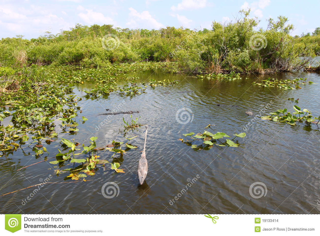 Everglades National Park clipart #17, Download drawings