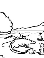 Everglades National Park coloring #15, Download drawings