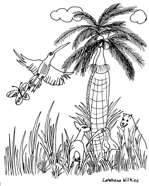 Everglades National Park coloring #17, Download drawings