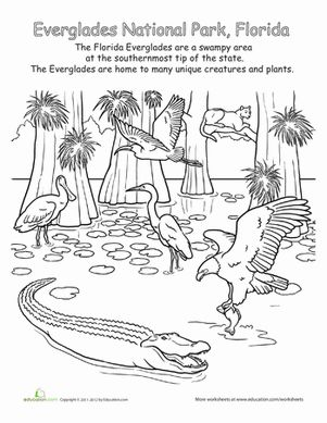 Everglades National Park coloring #6, Download drawings