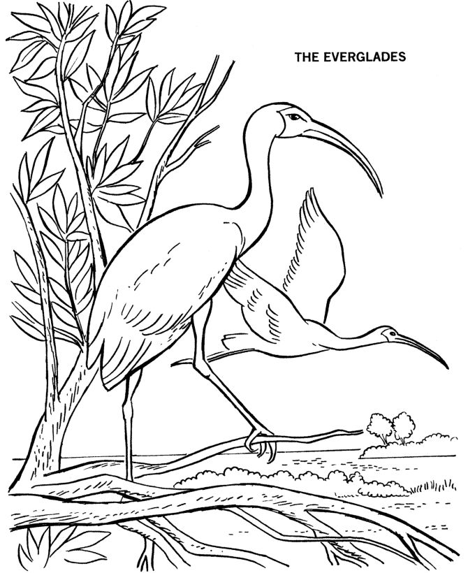 Everglades National Park coloring #11, Download drawings
