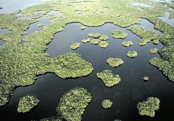 Everglades National Park svg #15, Download drawings