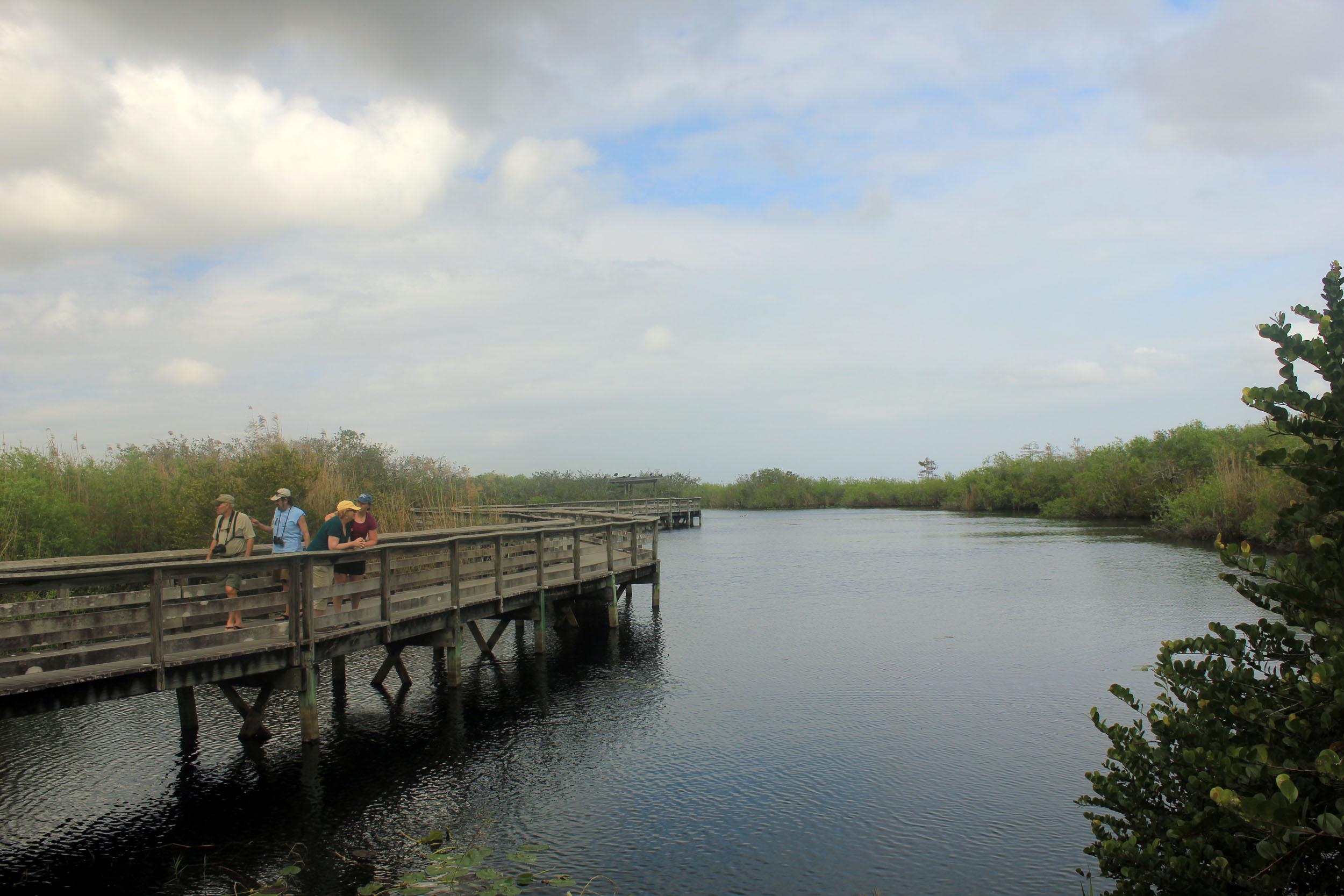 Everglades National Park svg #3, Download drawings