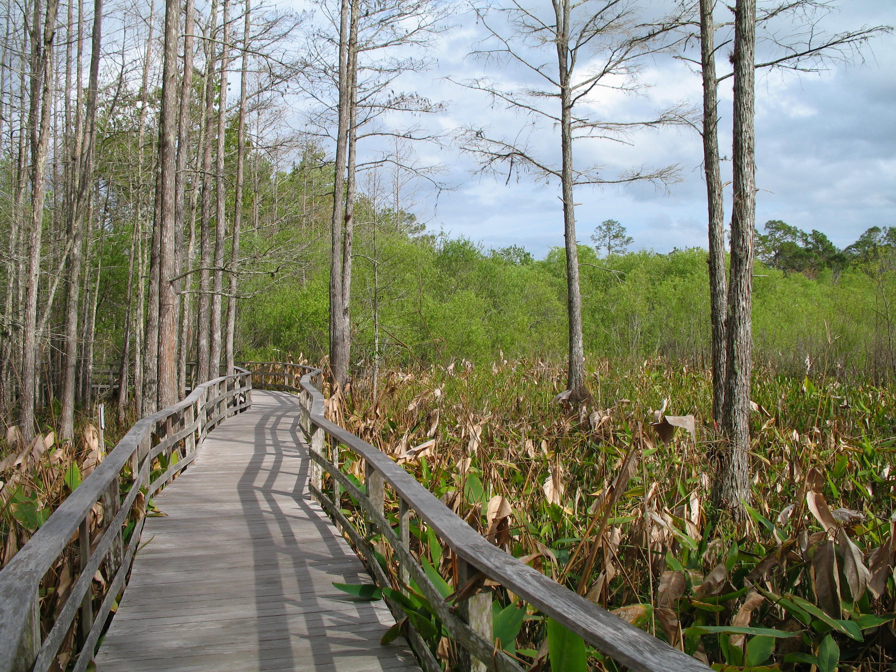 Everglades National Park svg #7, Download drawings