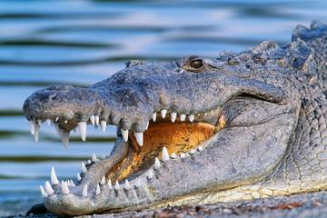 Everglades National Park svg #6, Download drawings