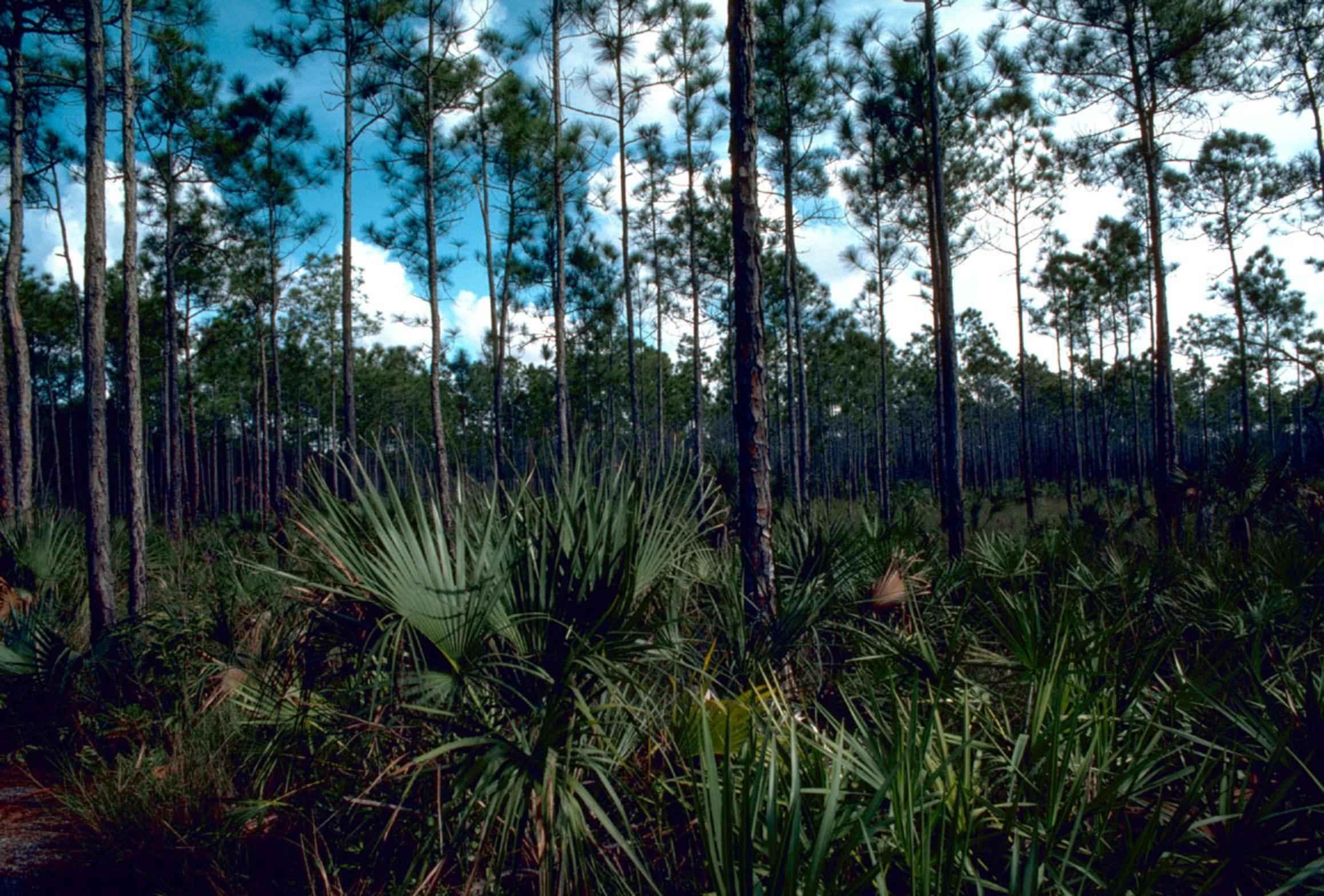 Everglades National Park svg #4, Download drawings