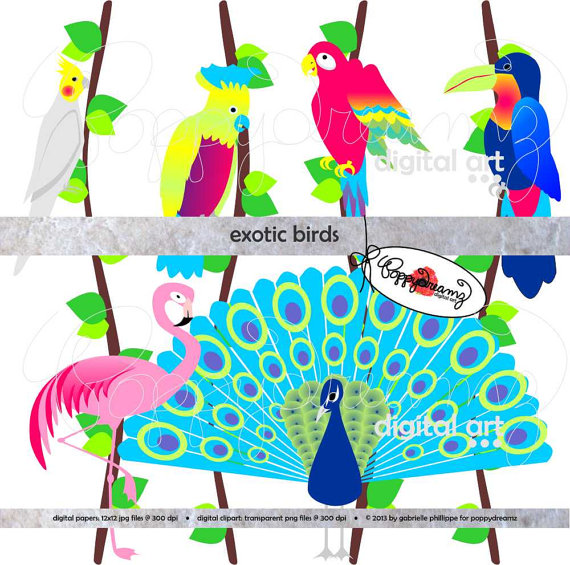 Exotic clipart #15, Download drawings