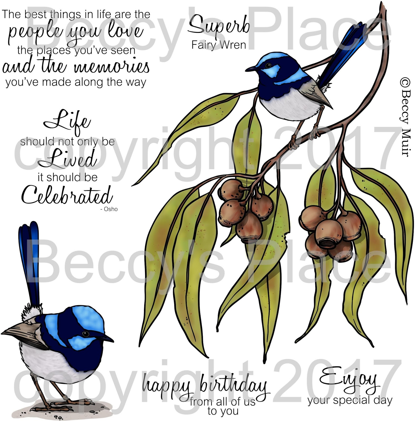 Fairy-wren clipart #7, Download drawings