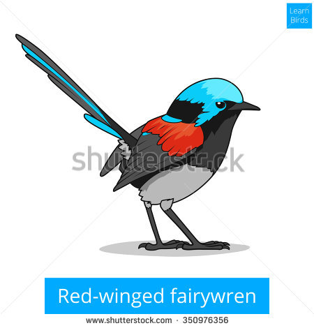 Fairy-wren clipart #2, Download drawings
