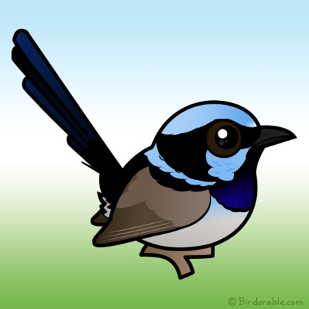 Superb Fairywren clipart #1, Download drawings