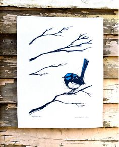 Fairy-wren clipart #1, Download drawings