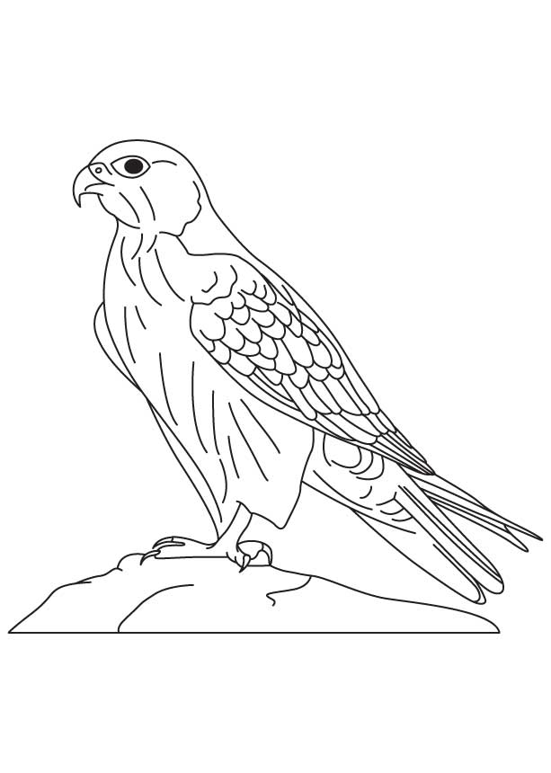 Prairie Falcon coloring #3, Download drawings