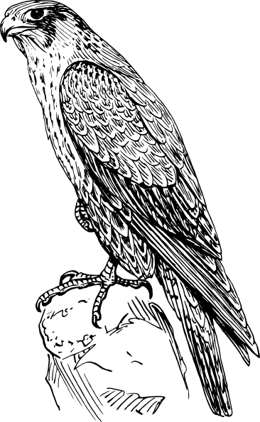 Peregrine Falcon coloring #5, Download drawings