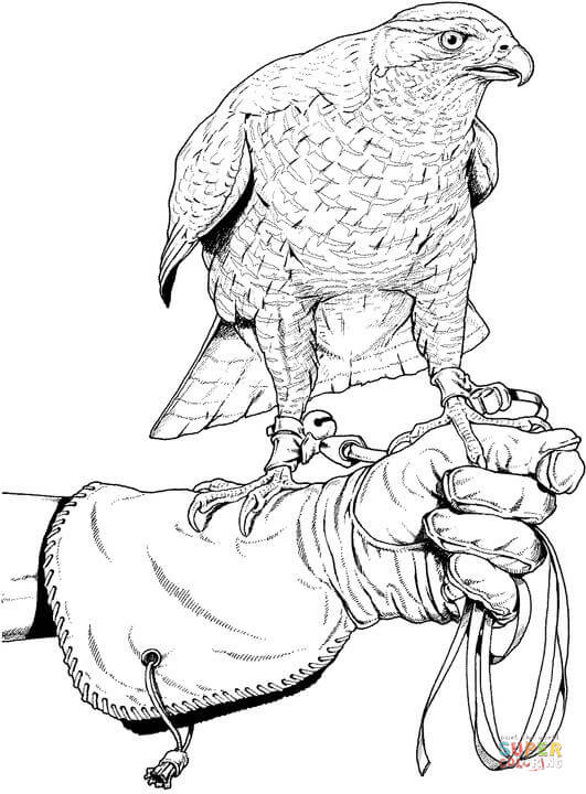 Peregrine Falcon coloring #11, Download drawings
