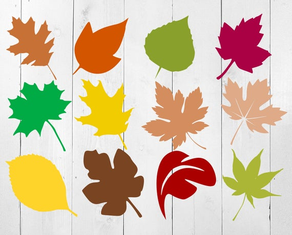 fall leaves svg #650, Download drawings