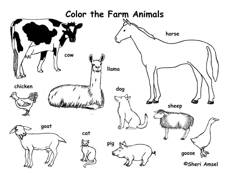 Farm Animals coloring #15, Download drawings