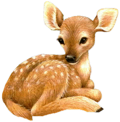 Fawn clipart #3, Download drawings