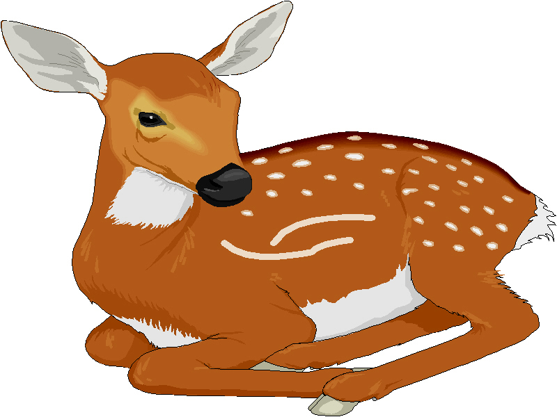 Fawn clipart #20, Download drawings