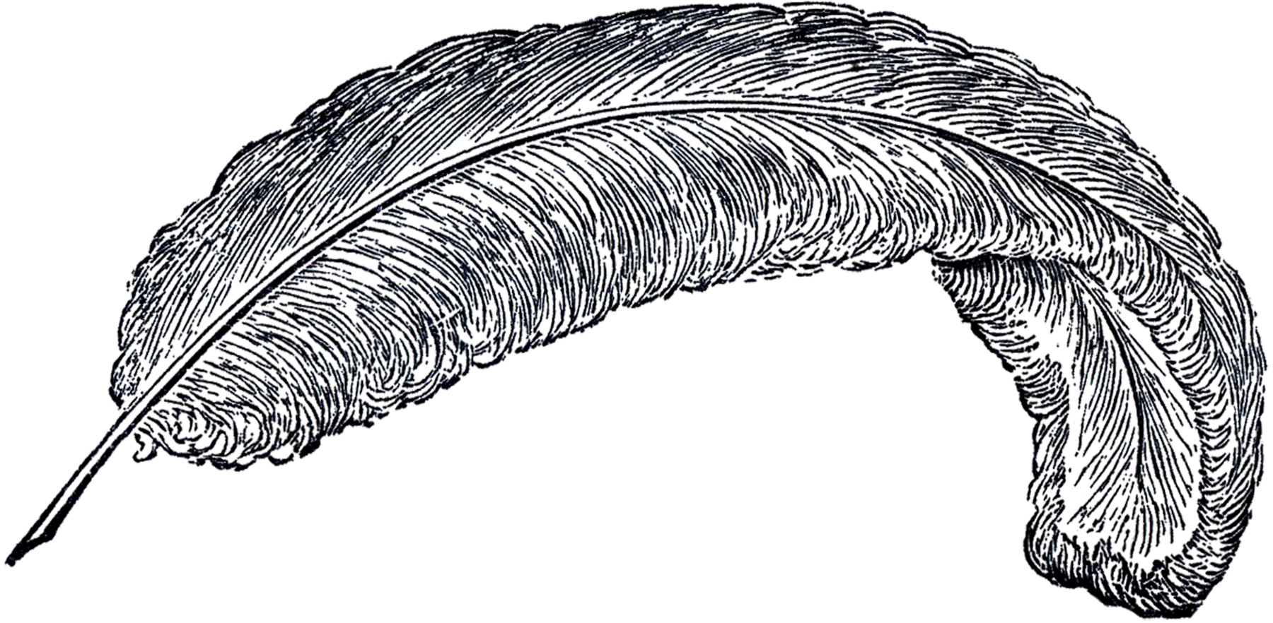 Feather clipart #4, Download drawings