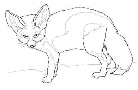 Fennec Fox coloring #9, Download drawings
