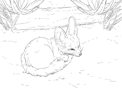 Fennec Fox coloring #7, Download drawings