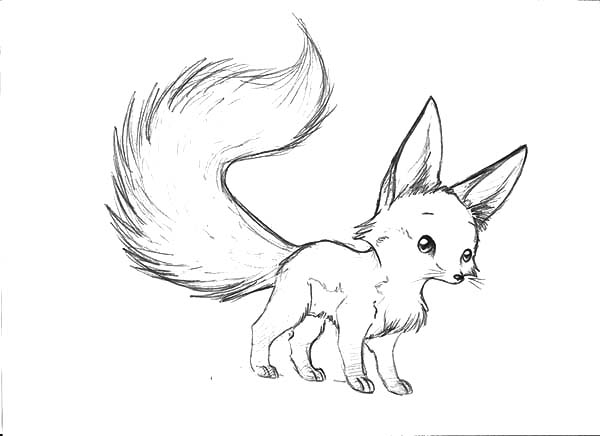 Fennec Fox coloring #8, Download drawings