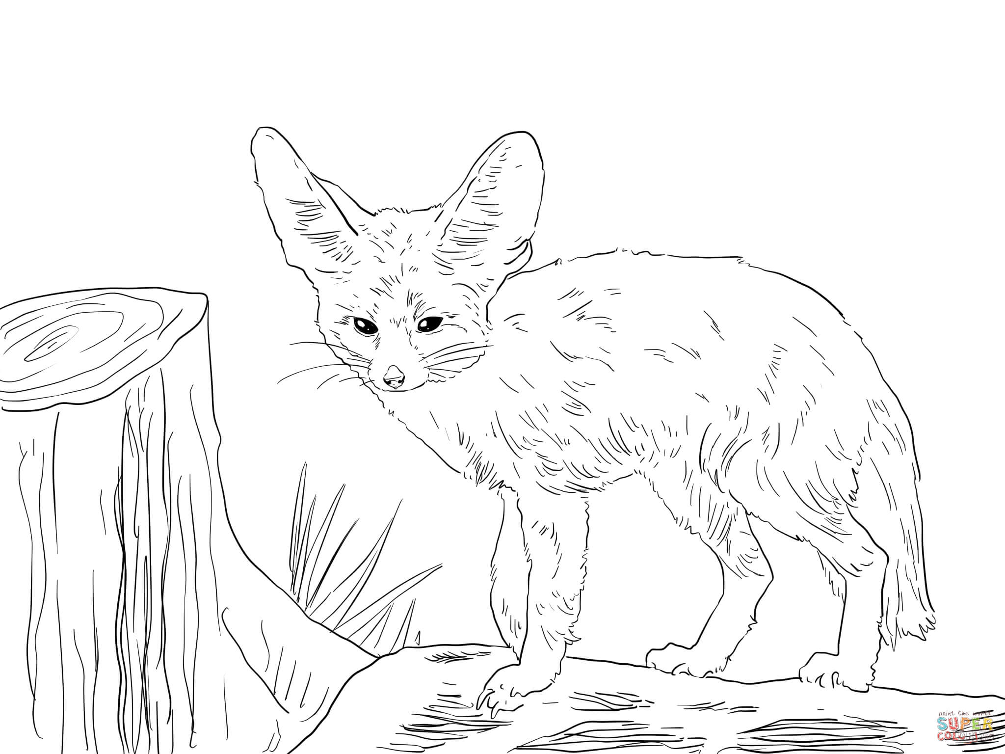 Fennec Fox coloring #2, Download drawings