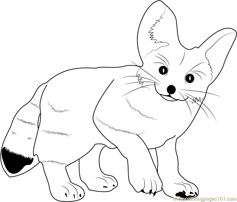 Fennec Fox coloring #17, Download drawings