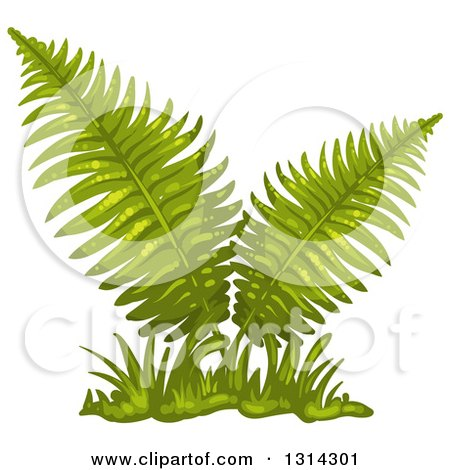 Fern clipart #2, Download drawings
