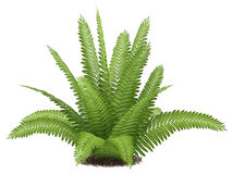 Fern clipart #14, Download drawings
