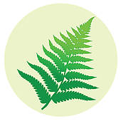 Fern clipart #15, Download drawings