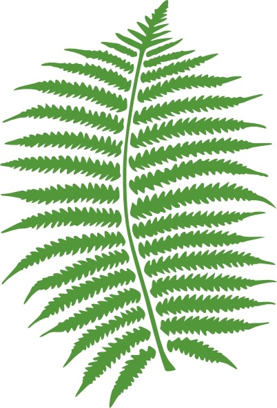 Fern clipart #19, Download drawings